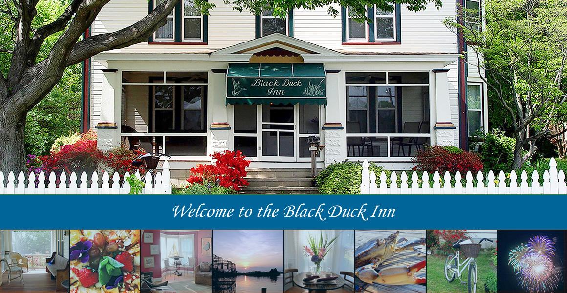 The Black Duck Inn